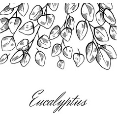 Square postcard with sketch eucalyptus with vector