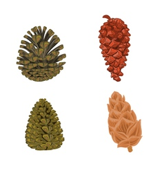 Four pine cones larch cones vector image