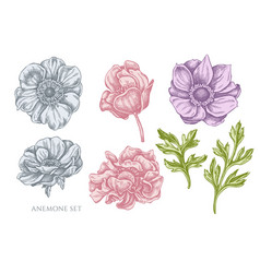 Collection hand drawn pastel anemone vector