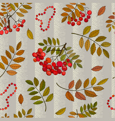 Seamless pattern with autumn bunches rowan vector