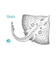 Skate hand-drawn vector