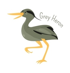 Grey heron isolated on white vector image vector image