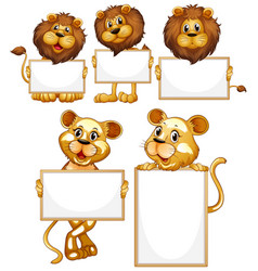 blank sign template with many lions on white vector image