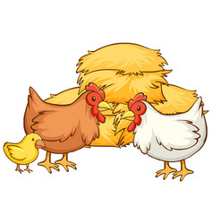 Isolated picture chickens and hay vector
