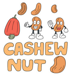 set of cashew nut vector image
