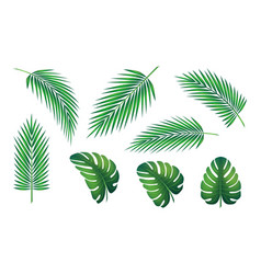 tropical leaf collection vector image