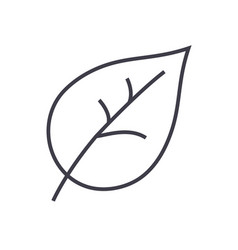 leaf line icon sign on vector image
