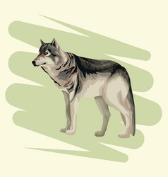 wolf art drawing vector image
