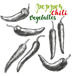 chili peppers vegetable set hand drawn vector image