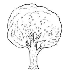 poplar vector image vector image