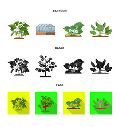 Greenhouse and plant sign vector