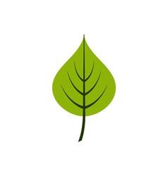Linden-leaf vector