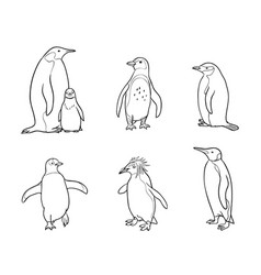Set of different penguins in outlines vector