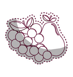 Sticker silhouette grape and pear fruits icon vector