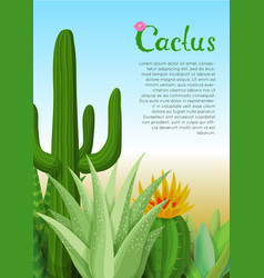 cacti and succulents poster vector image