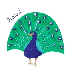 cartoon peacock isolated on white vector image