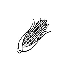 corn cob hand drawn sketch icon vector image