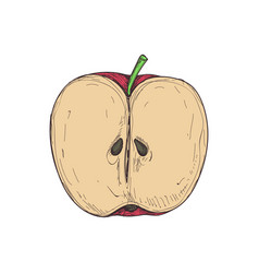 juicy apple hand drawn isolated icon vector image