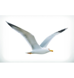 Sea gull icon vector