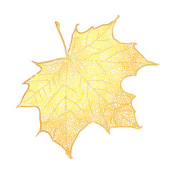yellow maple leaf isolated on white background vector image