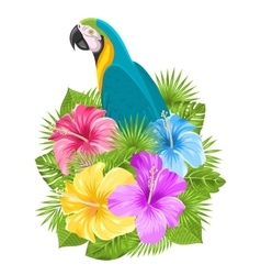 Parrot Ara Colorful Hibiscus Flowers Blossom and vector image vector image