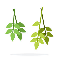 Bunches bay leaves flat isolated vector