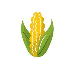 delicious and healthy cob corn food vector image