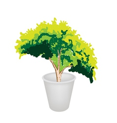Evergreen Plant in Flower Pot vector