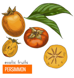 Persimmon color vector