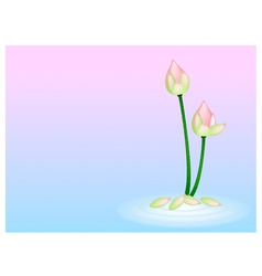 Pink Lotus Flower on Pink with Blue Background vector