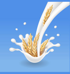 Rice spikelets in milk splash vector