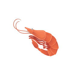 cartoon with sea shrimp in flat style vector image