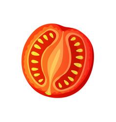 tomato chopped tomato isolated on white vector image