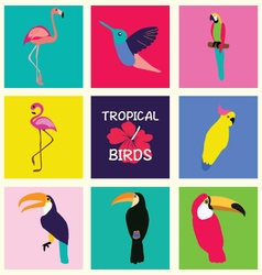 hand drawn Tropical Set of birds Bright exotic vector image