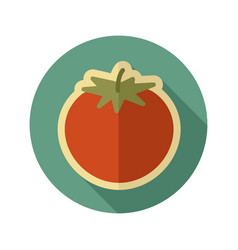 tomato flat icon vegetable vector image