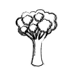 contour vegetable broccoli icon vector image