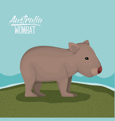 Australia wombat poster with outdoor scene in vector