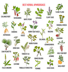 Best natural herbal aphrodisiacs vector