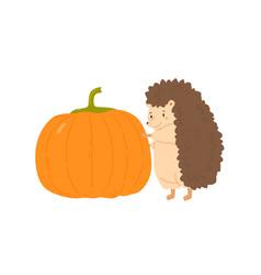 Cute hedgehog holding huge ripe pumpkin vector