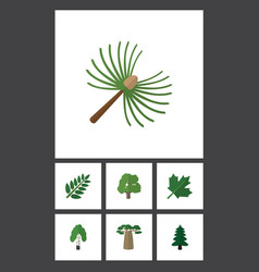 Flat icon natural set of baobab acacia leaf park vector