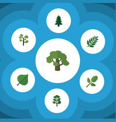 flat icon nature set of acacia leaf tree foliage vector image