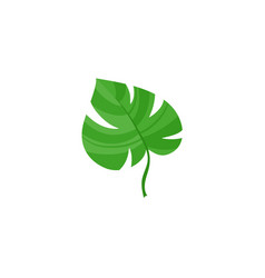 Flat tropical monstera leaf summer icon vector
