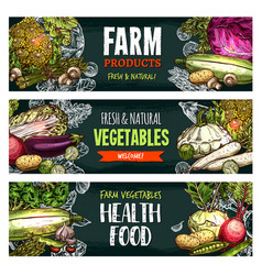 Fresh organic vegetables sketch banners vector