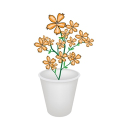 Lovely Orange Cosmos Flowers in A Flowerpot vector image