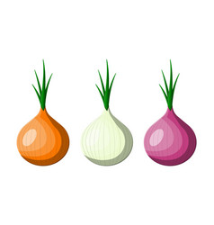 onion vegetable isolated on white vector image
