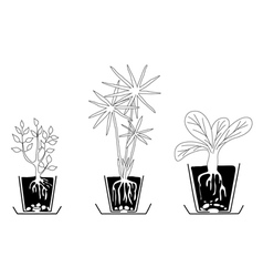 set of houseplants vector image