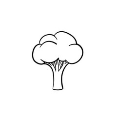 broccoli hand drawn sketch icon vector image