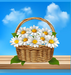 daisy realistic colored composition vector image