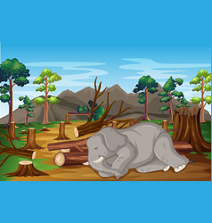 Scene with sick elephant and deforestation vector