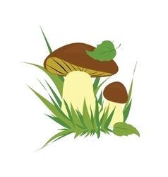Boletus on a white background vector